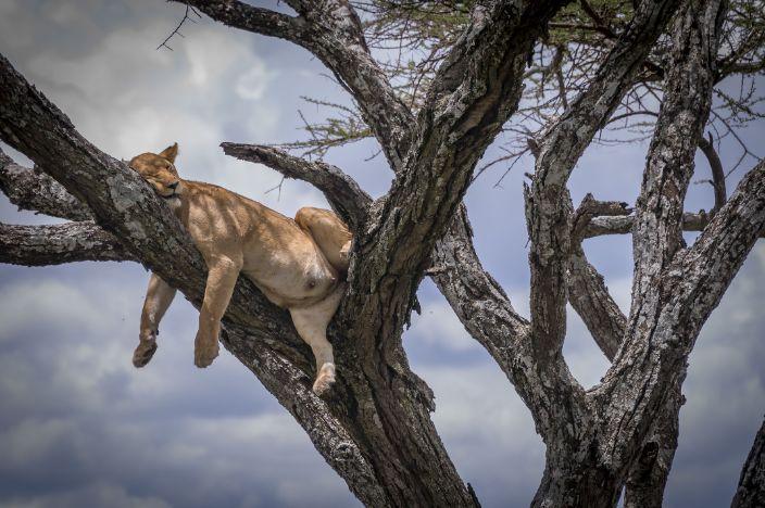 Cougar web stranica za upoznavanje Južna Afrika
